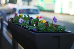 Some flowers Over Heywood road. Picture of flowers over town road in Heywood in spring stock images