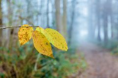Foggy forest path with focus on autumn leaves in the foreground. Picture fo a foggy forest path with focus on autumn leaves in the foreground Stock Images