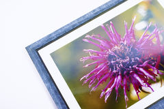 Picture in frame Royalty Free Stock Photo