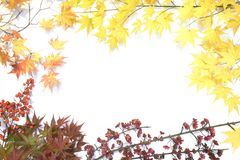 Picture frame of autumn leaves Stock Image