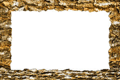 Picture frame of the bark Stock Image