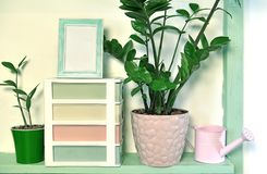Picture frame with empty blank, watering can, boxes and home plants in pots royalty free stock images