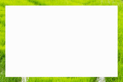 picture frame form green rice fields Royalty Free Stock Photo