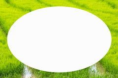 picture frame form green rice fields Royalty Free Stock Images