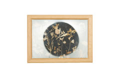 Picture frame with old dried flowers Royalty Free Stock Image