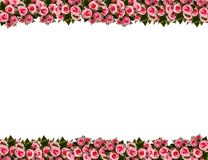 Picture frame by pink roses Stock Image