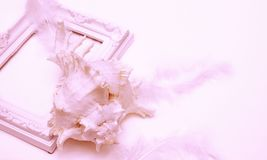 Picture frame, shell and feathers all coral stock images