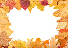 Picture frame from yellow autumn leaves Royalty Free Stock Photography