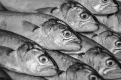 Picture of fresh Black Sea fish in black and white Royalty Free Stock Images