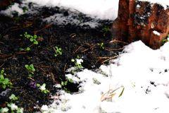 Winter snow meeting little green grass and plants stock photography