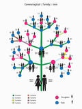 Picture of the genealogical family tree Royalty Free Stock Photography