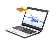 Picture of gold fish. And laptop computer Stock Photos