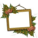 Picture Gold Frame With A Mountain Ash And Bunch Royalty Free Stock Images