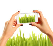 Picture of grass Stock Photography