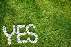 Picture of Green Lawn. Write Yes With white flowers Focus on flowers Royalty Free Stock Image