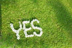 Picture of Green Lawn. Write Yes With white flowers Focus on flowers Royalty Free Stock Photo