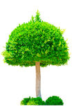 Picture of green tree Royalty Free Stock Photos