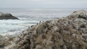 Cranes in California. A picture of a group of cranes on a rock near Carmel by the sea in California, USA, taken during a daytrip on a vacation in the fall Stock Image