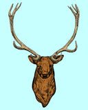 Picture horned deer . Royalty Free Stock Photo