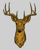 Picture horned deer . Royalty Free Stock Photography