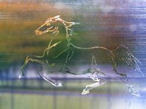 Picture of horse on misted glass royalty free illustration