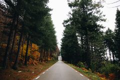 Autumn Background of a Road in the Forest royalty free stock photo