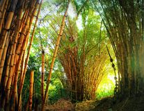 Bright light shining into a magical bamboo forest stock image