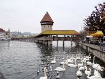 Chapel Bridge in Lucerne. Picture of the Kapellbrück, Chapel Bridge, across the Reuss river in the city of Lucerne, Switzerland. There are also white swans Royalty Free Stock Image