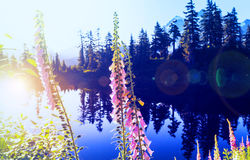 Picture lake Royalty Free Stock Image