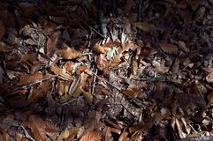 Leaves on the floor. Picture of leaves on the floor royalty free stock images