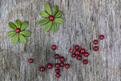 Picture made of leaves and berries Royalty Free Stock Images