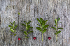 Picture made of leaves and berries Royalty Free Stock Photo