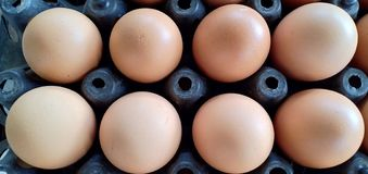 Picture many eggs stock photos
