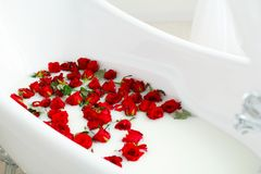 Picture of many red roses in bathroom filled with milk. Healthca Royalty Free Stock Photos