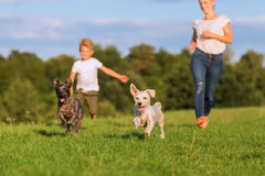 Mother runs with her boy and two small dog on a meadow Stock Photos