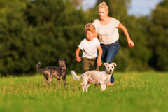 Mother runs with her boy and two small dog on a meadow Stock Photography