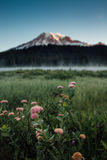 Mt Rainier and Wildflowers at Reflection Lakes Sunrise. This is the picture of Mt Rainier at Reflection Lakes in the morning with fog and mist at Mt Rainier Royalty Free Stock Image
