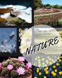 A picture of nature, or a painting with many flowers and fields and birds stock photo