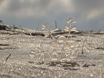 Snowflake. In the picture is one snowflake in the snow Royalty Free Stock Image