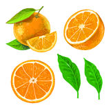 Picture of orange Royalty Free Stock Photography