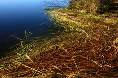 Pacific Northwest forest and water reeds Stock Images