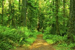 Pacific Northwest forest trail. A picture of an Pacific Northwest Washington state forest hiking trail royalty free stock photography
