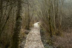 Pacific Northwest forest trail. A picture of an Pacific Northwest Washington state forest hiking trail stock photography