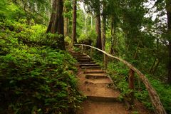 Pacific Northwest forest trail royalty free stock photos