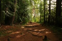 Pacific Northwest forest trail. A picture of an Pacific Northwest Washington state forest hiking trail stock image