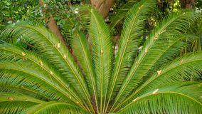 Palm tree leafs Stock Photo