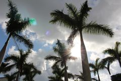 Palm tree. A picture of palm trees Stock Image
