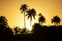 Palm trees on a sunset. A picture of palm trees on a sunset in Puerto Rico royalty free stock photos