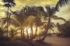 Picture paradise royalty free stock photography