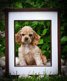 Picture perfect puppy Royalty Free Stock Photo